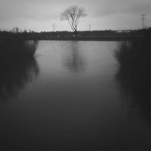 View at a tree