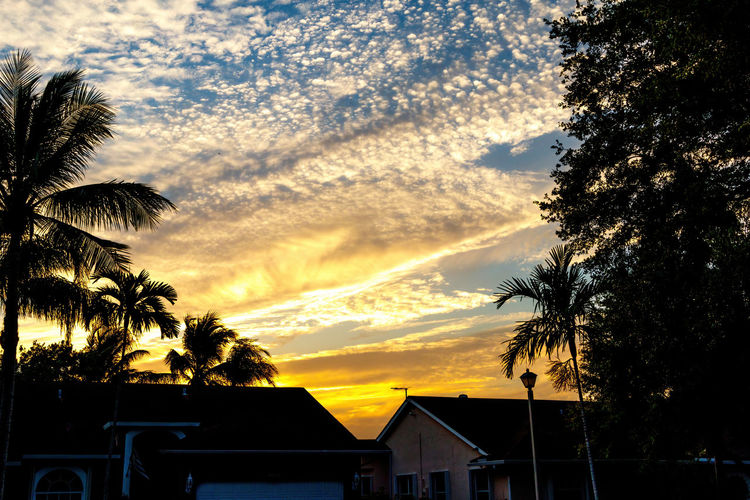 Silhouette trees and houses against sky at sunset