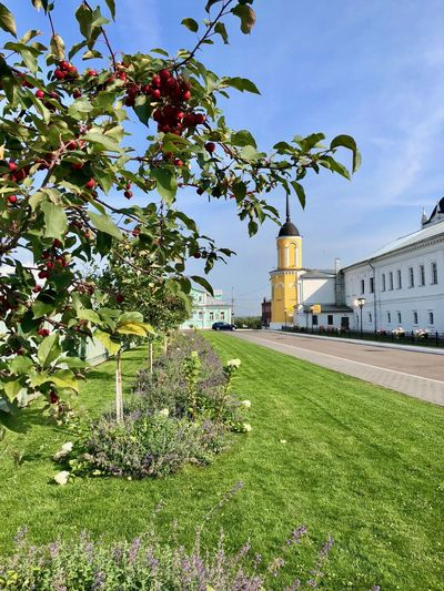 Plant Built Structure Building Exterior Architecture Growth Nature Tree Building Day No People Grass Flower Green Color Flowering Plant Freshness Fruit Outdoors Beauty In Nature Kolomna Moscow Region Russia Apple Tree