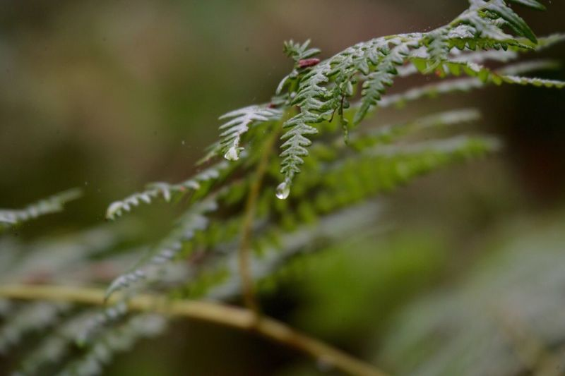 From My Point Of View Tadaa Community Taking Photos Hiking A drop of dew on a thirsty fern.