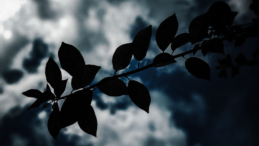 Low angle view of silhouette leaves against sky