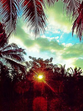 Sore Hari Sunset✨trees✨ Fortheloveofediting