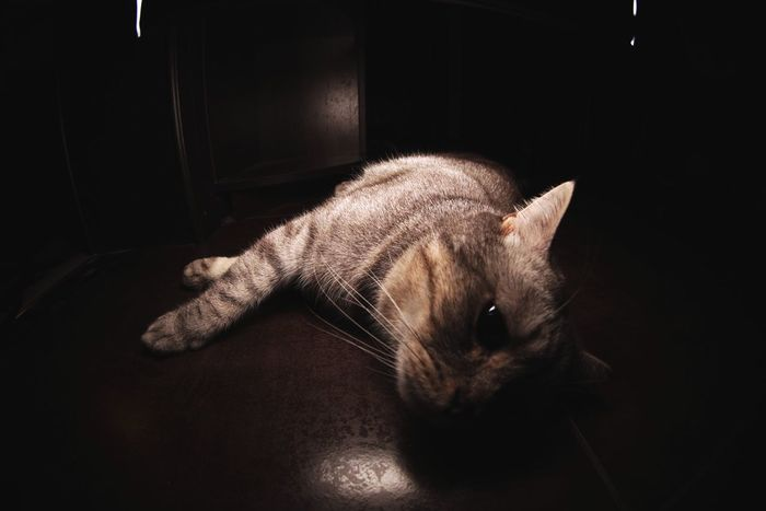 British shorthair Marsel Domestic Cat Pets Domestic Animals One Animal Mammal Animal Themes Indoors  Feline Cat No People Nature Close-up Day British Shorthair Whisker Kitty Kitchen Tabby Cat
