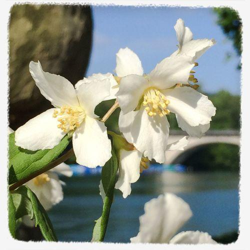 Flower Collection riverside Rhein