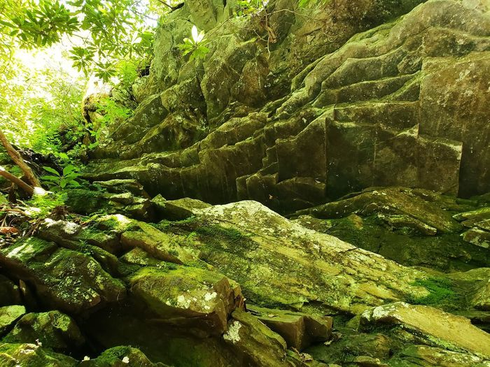 Scenic view of rocks in forest
