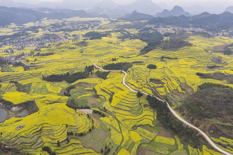 High angle view of yellow farm