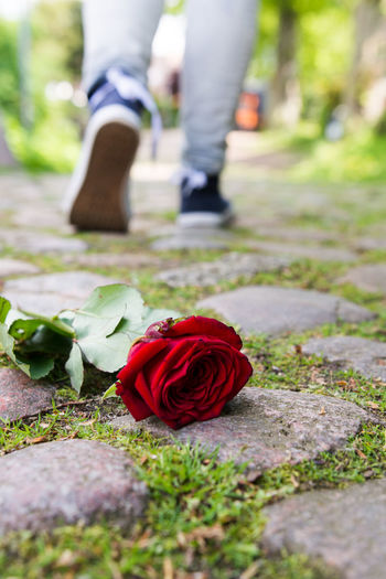 Red Rose On Footpath While Man Walking