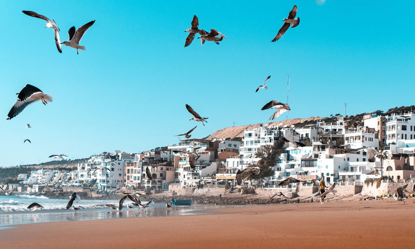 Flock of birds flying over beach against buildings