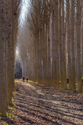 Nature Eyem Nature Lovers  Eyem Best Shots Love Trees Landscape Forest
