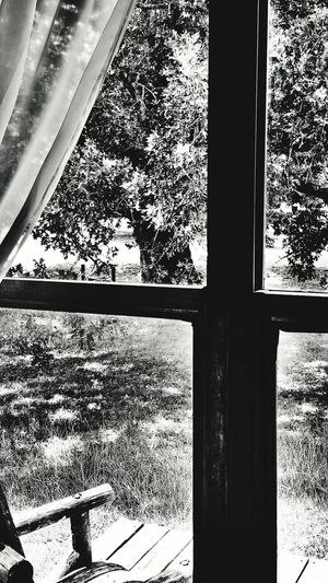 Taking Photos Check This Out Bnw_friday_eyeemchallenge Through The Window From My Point Of View Frontporch Frontyard Blackandwhite Photography