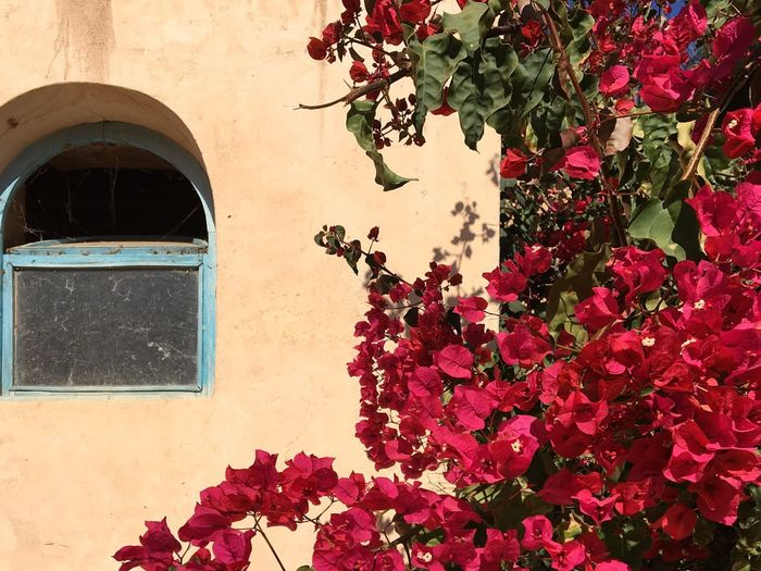 Low angle view of pink flowering plant on window of building