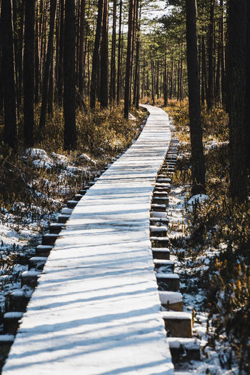 Empty footpath amidst trees in forest
