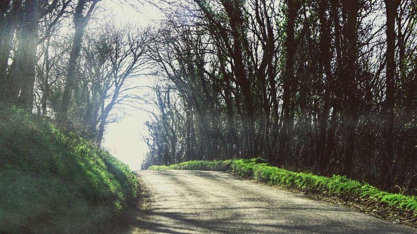 Nature Road Sunlight ☀ Trees SonyNEX5n