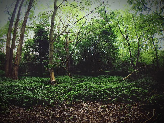 Nature Nature Photography Forest Trees Fisheye Tranquil Scene WoodLand No People Beauty In Nature