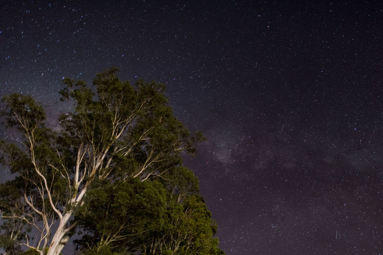 starry night at Lismore Astronomy Beauty In Nature Constellation Galaxy Low Angle View Milky Way Nature Night No People Outdoors Scenics Sky Space Star - Space Star Field Starry Tranquil Scene Tranquility Tree