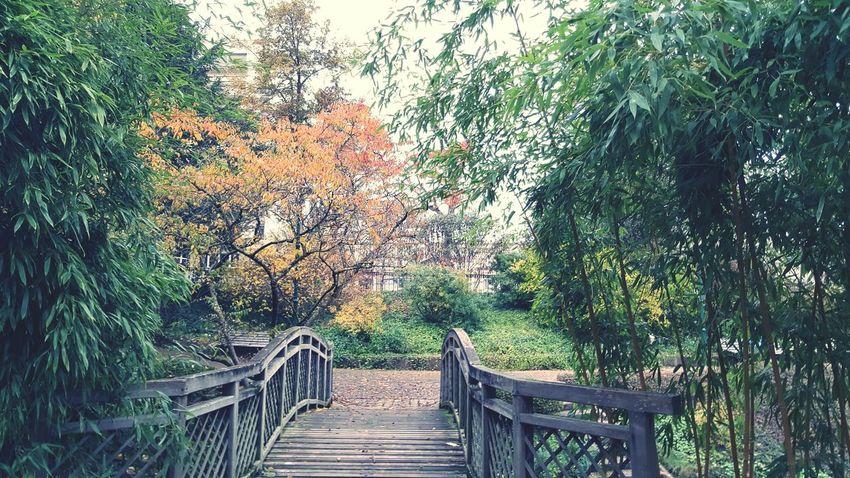 France 🇫🇷 Nature Outdoors Tree Autumn Bridge Garden Photography