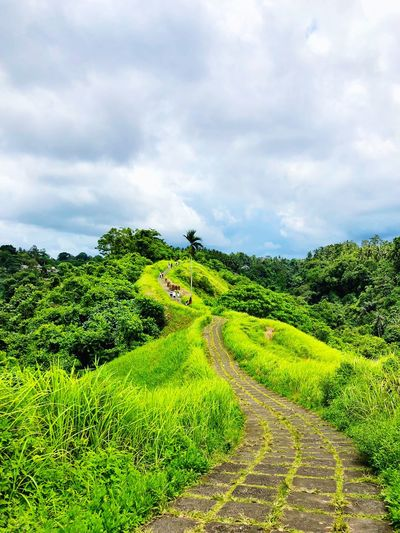 Plant Cloud - Sky Green Color Sky Growth Beauty In Nature Nature Land No People Field Scenics - Nature Tranquility Landscape Day Foliage Tranquil Scene Environment Tree Agriculture Lush Foliage