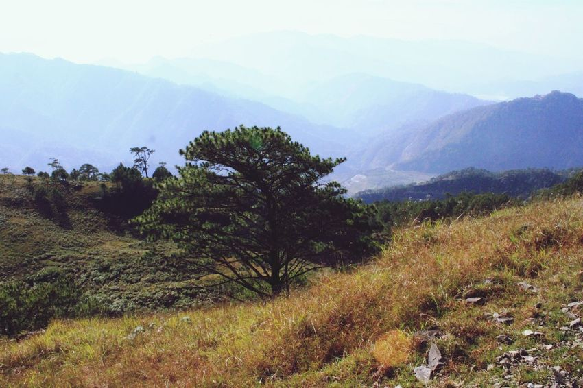 Tree Nature Pinaceae Mountain Landscape Beauty In Nature Outdoors No People Day Sky Lush - Description Travel Goals Rocky Mountains Philippines Eyeem Philippines Mt.Ulap Mountain View Trekking Hiking Tourism Adventure Full Length Togetherness