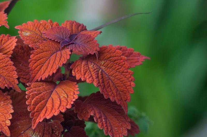 2019 Back Yard Canada Etobicoke Garden Jack Nobre June Ontario Wisteria Gardening Plant Growth Outdoors Nature