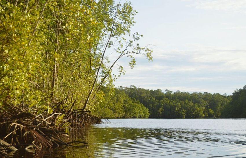 Mangroves Riverside River View in Keakwa Timika.