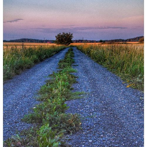 Sweden The True Story The Great Outdoors - 2018 EyeEm Awards Sunset Field Sky Grass Landscape