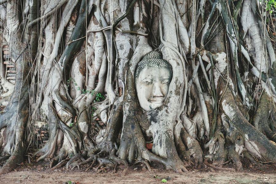 Hello World Taking Photos Enjoying Life Hi! Traveling The World Amazing Buddha Ayutthaya Ayutthaya | Thailand Watmahathat Travel Traveling Fujifilm Thailand