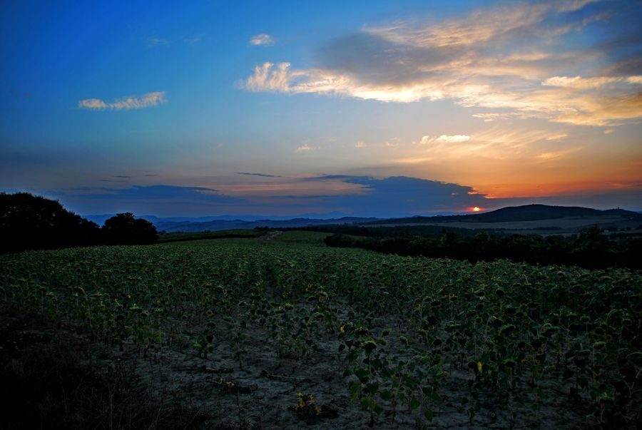 Montalcino. Agriculture Beauty In Nature Cloud - Sky Crop  Day Farm Field Growth Landscape Mountain Nature No People Outdoors Plant Rural Scene Scenics Sky Sunset Tranquil Scene Tranquility