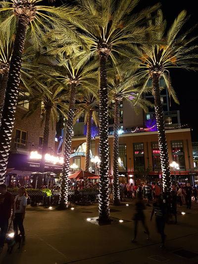 Night Illuminated Tree Celebration Outdoors