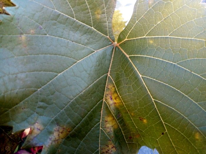 Leaf Nature Close-up Autumn Beauty In Nature Day Green Color Outdoors No People Fragility Freshness