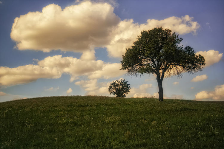 A small tree on