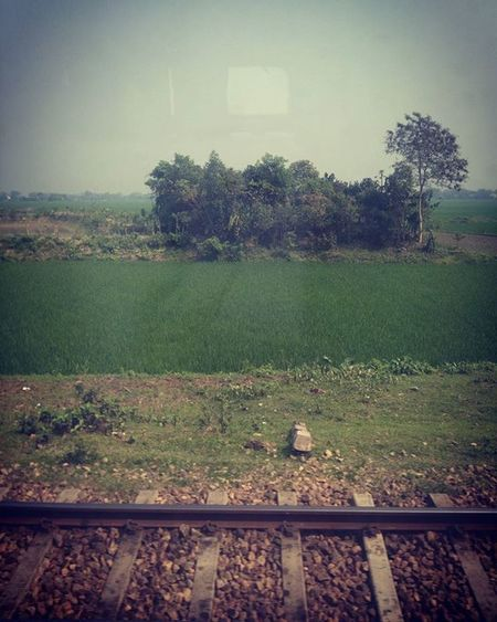 Trainscape ! Js Jashimsalam Photographer Photography Photojournalism Documentary Dailylife Travel Landsacpe Train Rail Village Trainscape Track Green Tree Paddy Field Bangladesh Insta Instagram Morning Light