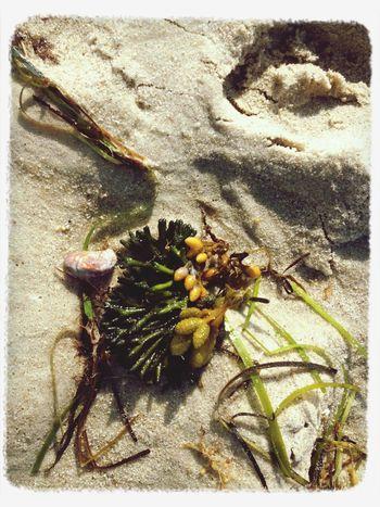 "©Ann Norsworthy ""w a t e r' s e d g e 1"" The Explorer - 2014 EyeEm Awards Summer #beach EyeEm Best Shots - Nature IoLIGHTstudios"