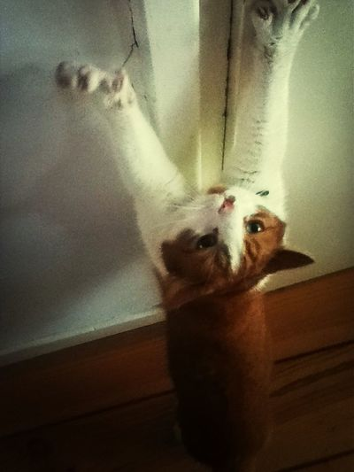 Swaggercat Cat Likebacker Likeforlike #likemyphoto #qlikemyphotos #like4like #likemypic #likeback #ilikeback #10likes #50likes #100likes #20likes #likere