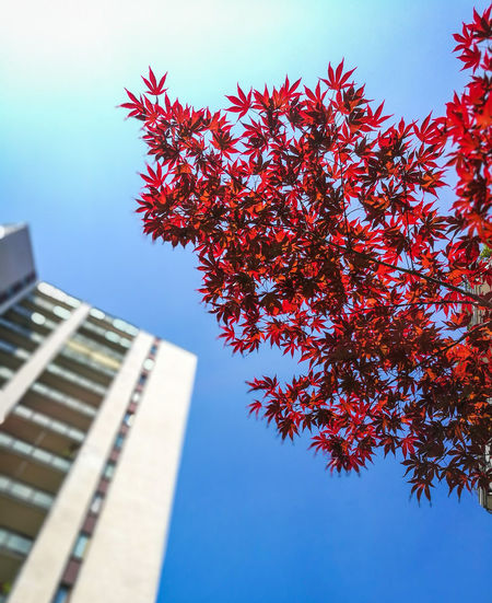 Blue Sky Beauty In Nature Joyful Joy Of Life Spring Springtime Spring In The City City Life City Tree Skyscraper City Red Blue Sky Architecture Building Exterior Built Structure Close-up