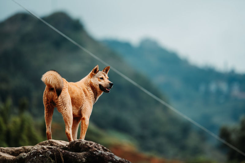 Dog standing on rock against mountains
