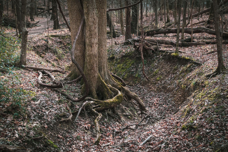 Sunlight falling on tree trunk in forest