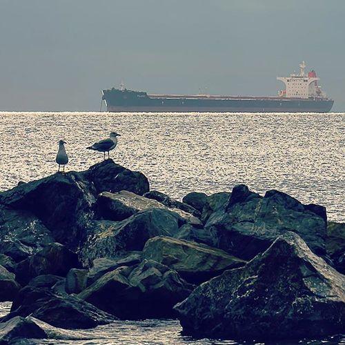 Tunisia IgersTunisia Seagull Boat Nature Sea Wikimediatn Wikilovesearth عصافر في نادي الركشة متاع جالطة :)