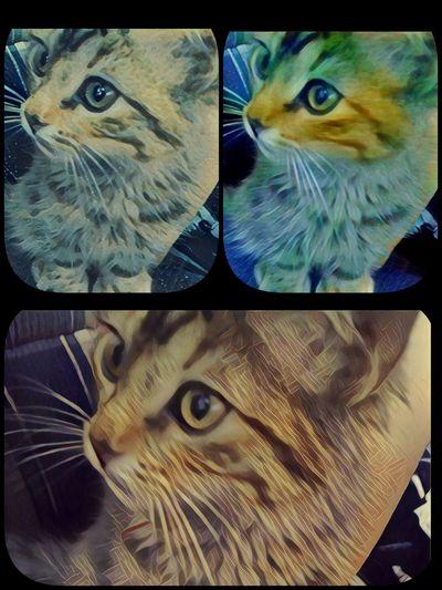 My Cat. 😍 Cat Catlove Cat♡ Neko Gato Gatitobonito Gatito Bebegato Babycat Adorolosgatos EyeEm Likeforlike Followme Follow4follow Like4like Megusta MegustaPormegusta Siguemeytesigo EyemEmlike