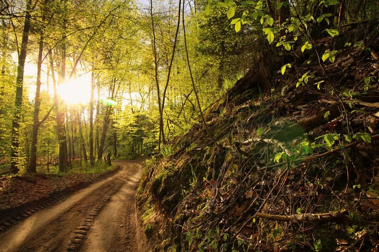 Afternoon Beauty In Nature Forest Green Landscape Light Masuren Masuria Nature No People Outdoors Road Tree Wide Angle Wide Angle View