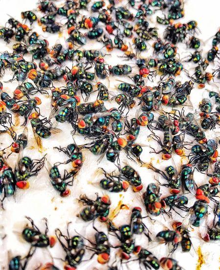 Close-up of multi colored crab