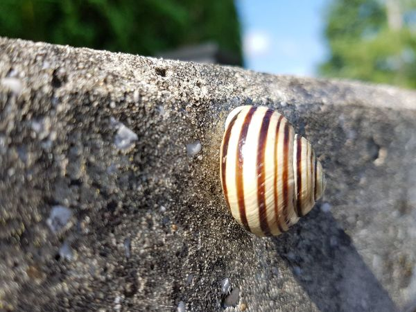 EyeEm Selects Outdoors Close-up Animal Themes Nature Schneckenhaus Schnecke