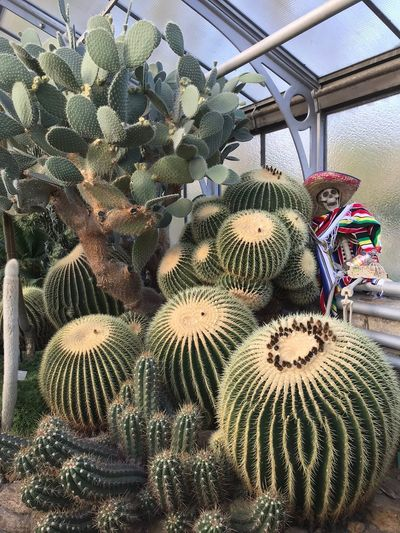 Pflanzen Plant