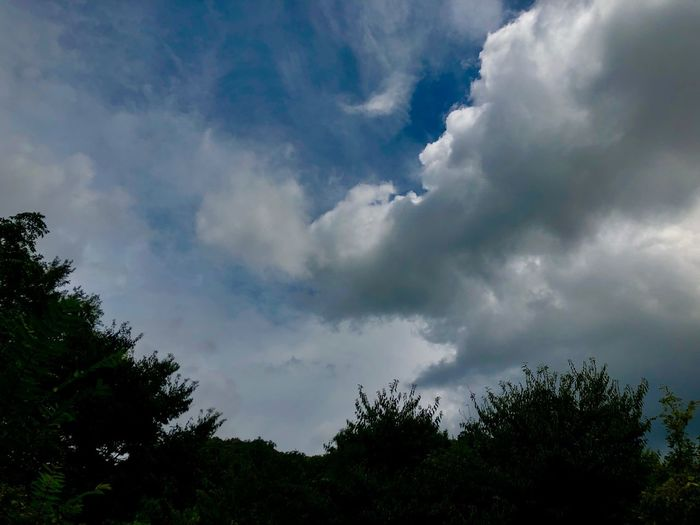 A Huge of Ominous Clouds Seen from the Fields. (180830-181013) Cloud - Sky Sky Tree Beauty In Nature Low Angle View Plant No People Scenics - Nature Nature Treetop Growth Storm Cloud Overcast Storm Tranquil Scene Tranquility Idyllic Silhouette Day Outdoors