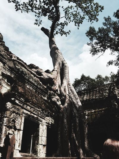Check This Out Waw Tree Cambodia Landscape Nature