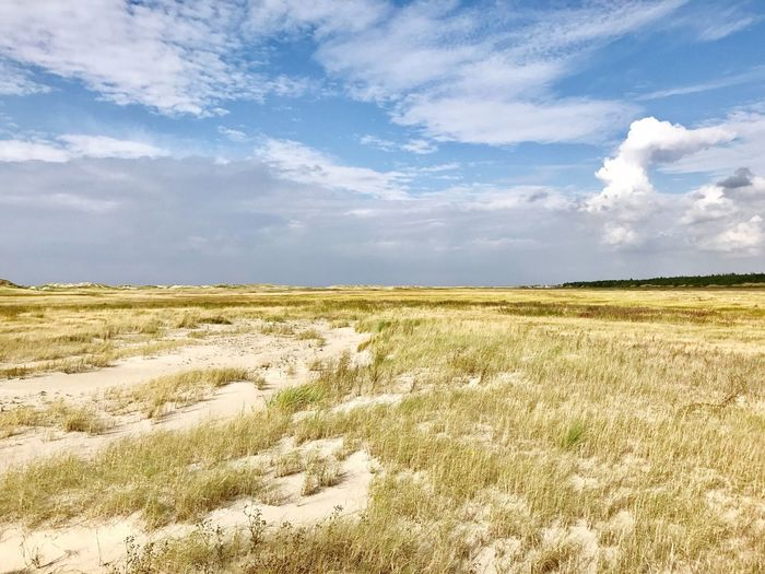 St. Peter Ording Schleswig-Holstein Landscape Tranquil Scene Tranquility Scenics Sky Grass Field Beauty In Nature Nature Growth Horizon Over Land Plant Non-urban Scene Blue Cloud Solitude Rural Scene Travel Destinations Day Remote Countryside No People Outdoors