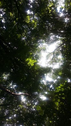 No People Backgrounds Full Frame Tree Nature Low Angle View Water Green Color Beauty In Nature Outdoors Sunbeam Day Close-up Sky