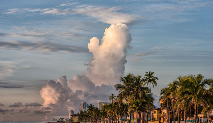 Touch the Sky Beach Beach Photography Beautiful Cloud - Sky Day Nature Nature Photography Nikon D750 No People Outdoors Palm Trees Photographyisthemuse Smoke - Physical Structure Travel Destinations Travel Photography Tree WithMyTamron Beach Life