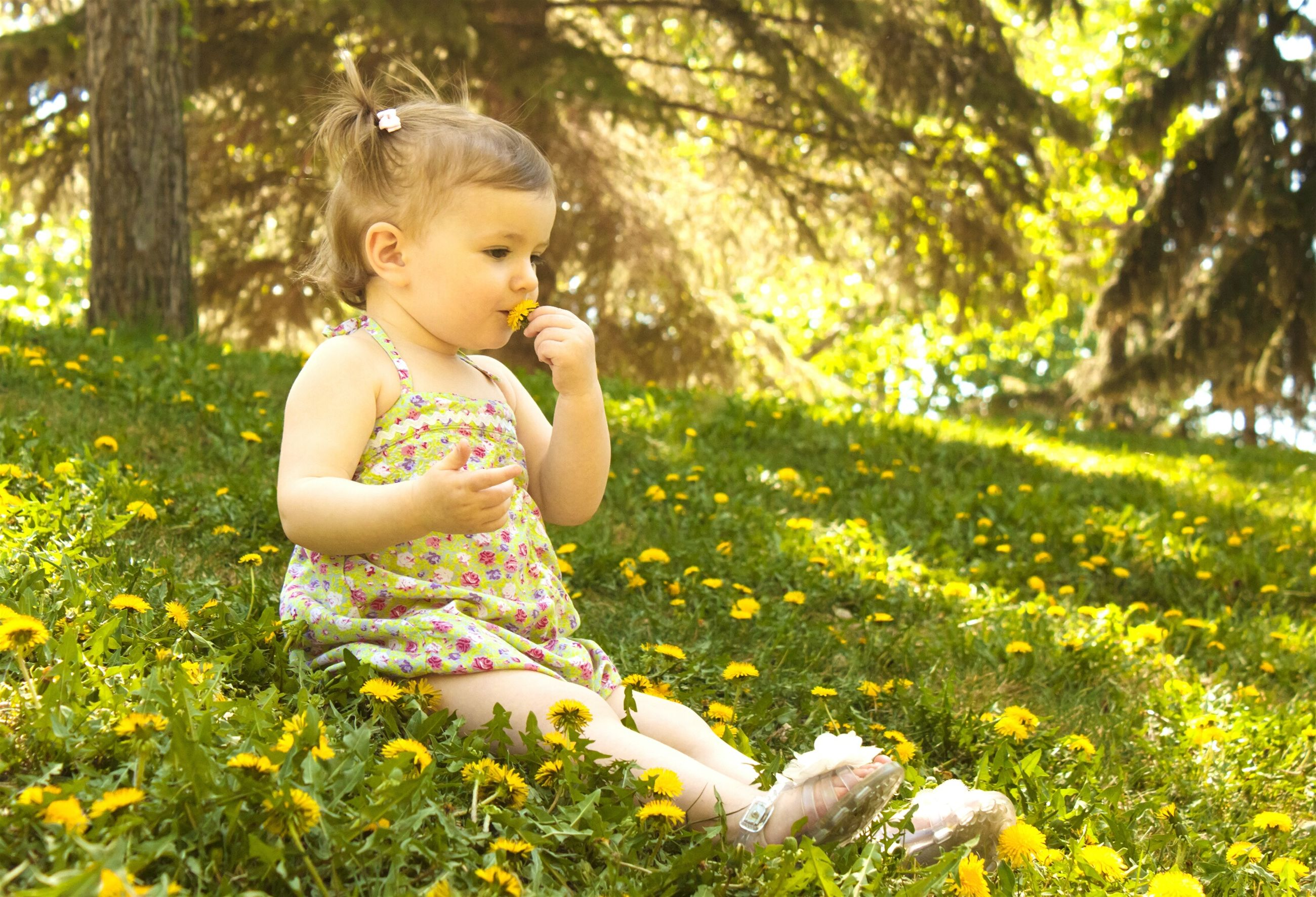 childhood, cute, elementary age, leisure activity, flower, innocence, lifestyles, focus on foreground, person, fragility, holding, casual clothing, nature, day, toddler, field, outdoors, leaves, growth, formal garden