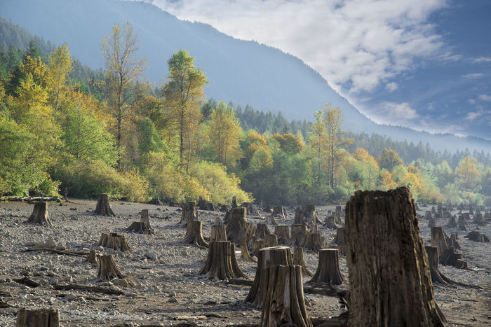 Tree stumps surrounded by beautiful fall colored foliage trees Global Warming Growth Industry Logging Beauty In Nature Climate Change Day Deforestation Deforestation Effect Flooding Growth Mountain Nature No People Outdoors Real Estate Scenics Sky Tree