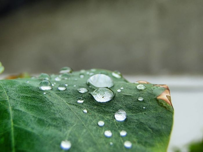 Detalhes Drop Water Nature Green Color Leaf Close-up Fragility